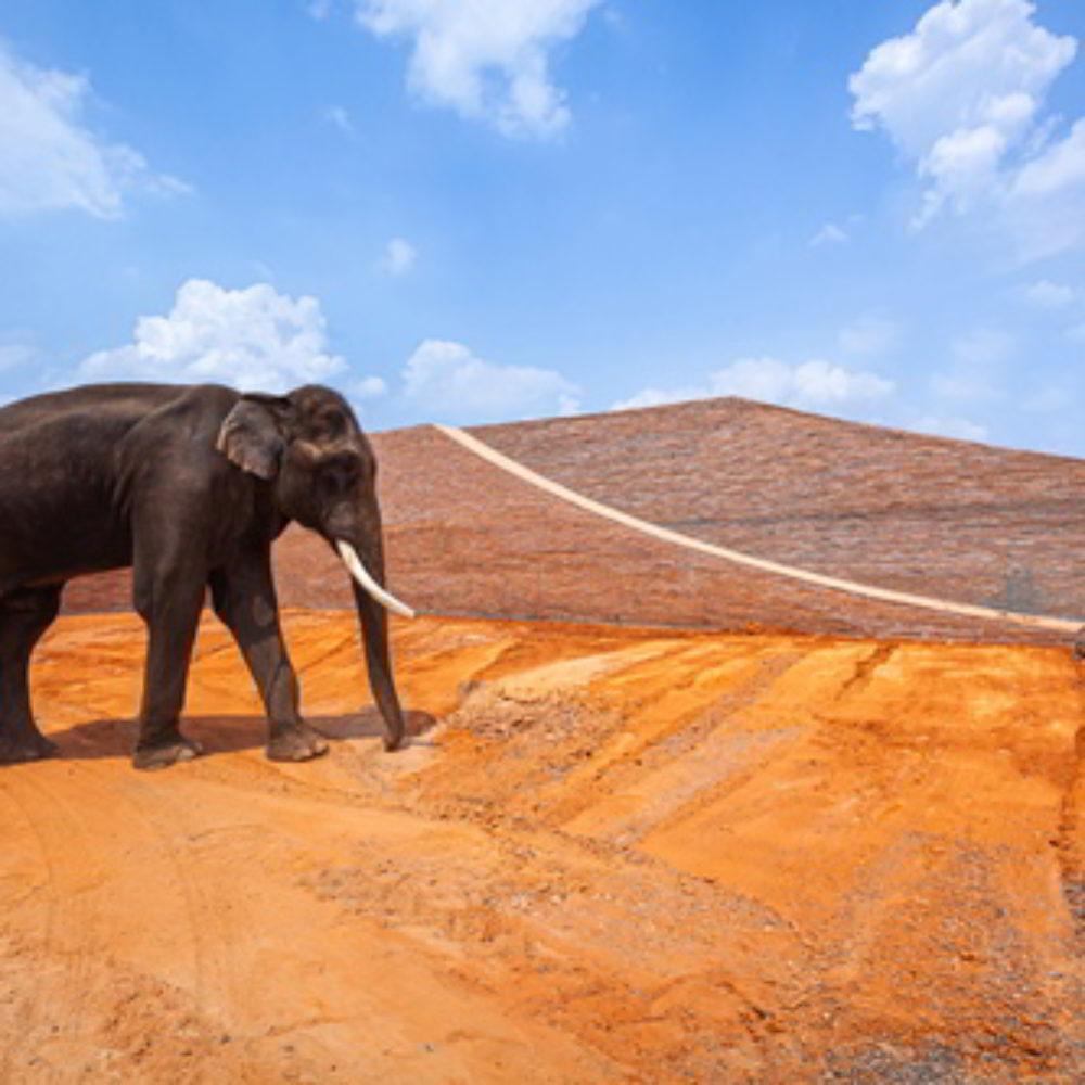 Elephant World: Raumdesign für Gefährten, die größer sind als wir